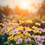 Aromatic Plants for Your Home Garden